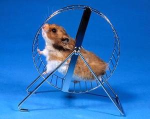 hamster-laufrad-beruf-psychofalle-beruf-web-Harald-Lange-Fotolia